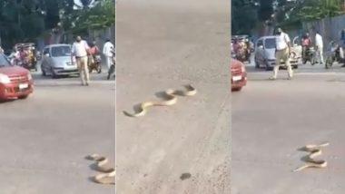 कर्नाटक: बीच सड़क पर आकर जब रोड़ क्रॉस करने लगा किंग कोबरा, सांप को देखते ही हो गया ट्रैफिक जाम (Watch Viral Video)