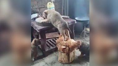 Viral Video: इस मुर्गे और बिल्ली का प्यार देख कर हो जाएंगे हैरान, देखें किस तरह खाना खिलाने में की मदद