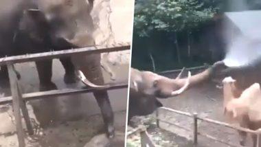 Elephant Viral Video: बड़े ही अनोखे अंदाज में हाथी ने नहलाया ऊंट को, वीडियो देख बन जाएगा आपका दिन