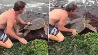 चट्टानों के बीच फंसने के बाद बाहर निकलने के लिए तड़प रहा था कछुआ, शख्स ने ऐसे बचाई जान (Watch Viral Video)