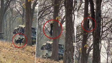 जीप में बैठे लोगों के सामने अचानक आया ब्लैक पैंथर, पलक झपकते पेड़ के ऊपर चढ़ते देख उड़े सबके होश (Watch Viral Video)