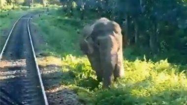 रेलवे ट्रैक पर ट्रेन के सामने आकर हाथी ने दिखाया टशन, हॉर्न की आवाज सुनकर भी नहीं हटा पीछे (Watch Viral Video)