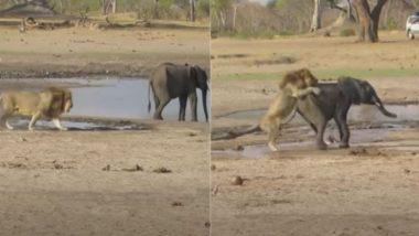 झील किनारे पानी पीते हुए हाथी पर पीछे से शेर ने किया जबरदस्त हमला, फिर जो हुआ… (Watch Viral Video)
