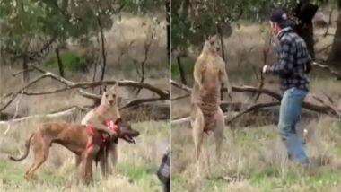 कुत्ते को बचाने के लिए शख्स ने कंगारू से ले लिया पंगा, दोनों ने किए दो-दो हाथ फिर… (Watch Viral Video)
