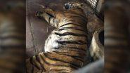 भोपाल के वनविहार नेशनल पार्क में बीमारी के चलते मुन्ना बाघ की मौत, ट्विटर पर दी जा रही है श्रद्धांजलि