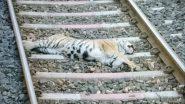महाराष्ट्र के गोंदिया में मालगाड़ी से टक्कर के बाद बाघ की मौत, शव पोस्टमार्टम के लिए भेजा गया