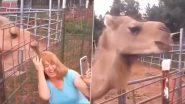 ऊंट के साथ सेल्फी ले रही थी महिला, तभी जानवर की ऐसी हरकत कि… Viral Video देख हंसी से हो जाएंगे लोटपोट