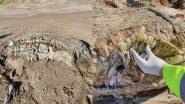 Mysterious Sea Creature: समुद्र किनारे बड़े-बड़े दांतों वाले रहस्यमय जीव को देख उड़े लोगों के होश, हैरान करने वाली तस्वीरें हुईं वायरल