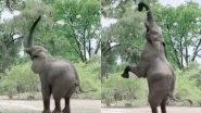 Viral Video: पेड़ के पत्तों तक जब नहीं पहुंच पाई सूंड तो हाथी ने अपनाई गजब की तरकीब, मजेदार वीडियो हुआ वायरल