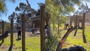 बच्ची को लेकर हाथी के पास फोटो खिंचवाने पहुंचा शख्स, यह देख गजराज को आया बहुत गुस्सा फिर… (Watch Viral Video)