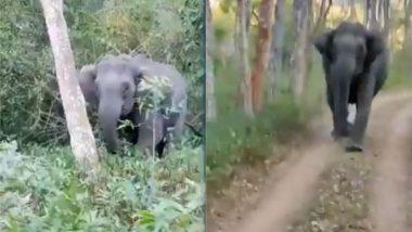 जब जंगल सफारी के दौरान जीप के पीछे पड़ गए गजराज, Viral Video में देखें पर्यटकों ने कैसे हाथी से बचाई अपनी जान