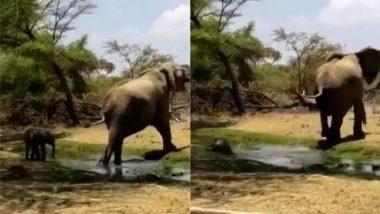 Viral Video: मां हथिनी के साथ चलते-चलते पानी में फिलकर गिरा नन्हा हाथी, वायरल वीडियो में देखें फिर क्या हुआ?