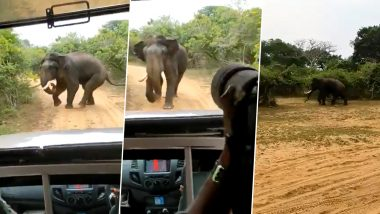 जंगल सफारी के दौरान जीप से हाथी का पीछा करने लगे पर्यटक, गजराज को आया गुस्सा तो ऐसे सिखाया सबक (Watch Viral Video)