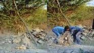 गुजरात: जाल में फंसकर झटपटा रहा था नन्हा शेर, वन रक्षकों ने ऐसे किया रेस्क्यू (Watch Viral Video)