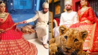 पाकिस्तानी कपल ने शादी में फोटोशूट के लिए किया नन्हे शेर का इस्तेमाल, Viral Video और Photo देखकर आप भी रह जाएंगे दंग