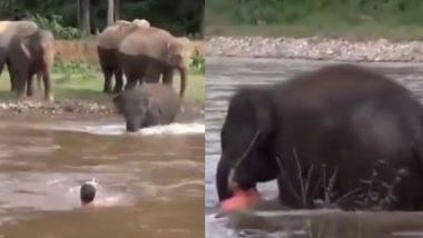 नदी में डूब रहे शख्स के लिए मसीहा बना हाथी, देखें गजराज ने कैसे बचाई उसकी जान (Watch Viral Video)