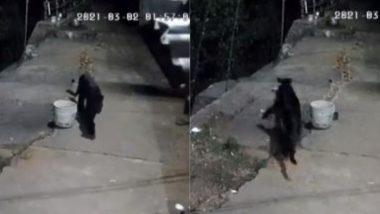 ब्लैक पैंथर ने आवारा कुत्ते पर किया जानलेवा हमला, Viral Video में देखें आगे क्या हुआ