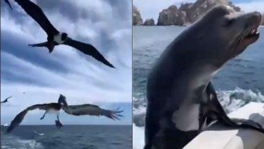 Sea Lion Viral Video: बोट पर सवार होकर शख्स पक्षियों को करा रहा था भोजन, अचानक समंदर से निकला सी लायन और फिर…