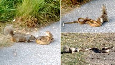 नन्ही गिलहरी का सांप ने रोका रास्ता, फिर दोनों के बीच हुआ जबरदस्त घमासान, Viral Video में देखें आगे क्या हुआ?