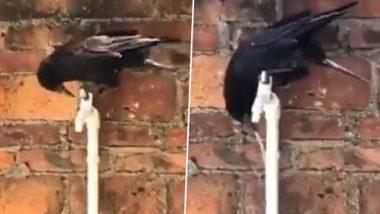 Thirsty Crow Viral Video: प्यासे कौवे ने टैप खोलकर पानी पिया और उड़ गया, लोगों ने पूछा नल बंद क्यों नहीं किया? देखें वीडियो