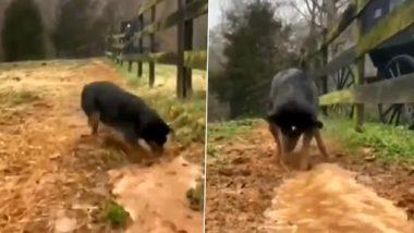 Dog Viral Video: इस कुत्ते ने मिनटों में में खोद डाली सिंचाई वाली नहर, वीडियो देख आप भी हो जाएंगे हैरान