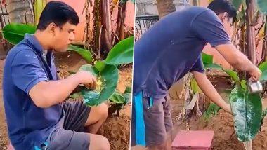 शख्स ने पेश किया प्रकृति प्रेम का अद्भुत उदाहरण, पेड़ से लगे केले के पत्ते पर खाना खाने का Video हुआ Viral