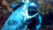 Friendly Seal! स्कूबा डाइवर को गले लगाकर सील ने दी जादू की झप्पी, मनमोहक वीडियो हुआ वायरल