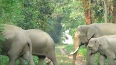 जंगल में मॉर्निंग वॉक के लिए निकला हाथियों का झुंड, मनमोहक वीडियो सोशल मीडिया पर हुआ वायरल (Watch Viral Video)