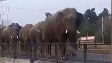 गंगा में डुबकी लगाने के लिए सड़क पर कतार में जाता दिखा हाथियों का झुंड, मनमोहक Video हुआ Viral
