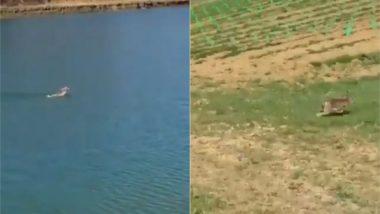 घास के मैदान पर पहुंचने के लिए खरगोश ने तैरकर पार की झील, Viral Video देख आप भी रह जाएंगे दंग