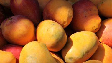 Mango Season: अब पूरे साल लीजिए आम का स्वाद, किसान ने आम की नई किस्म की ईजाद