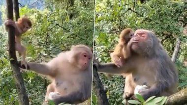 पेड़ पर चढ़ रहे नन्हे बंदर की मां बंदरिया ने खींची पूछ, फिर बच्चे ने जो किया… (Watch Viral Video)