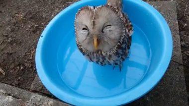 टब में बैठकर पानी पी रहे उल्लू का मनमोहक वीडियो हुआ वायरल, पक्षी का अंदाज देख आपको आ जाएंगी हंसी (Watch Viral Video)