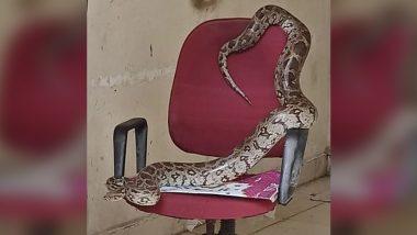 OMG! मीटिंग की अध्यक्षता करने जब कुर्सी पर कब्जा जमाकर बैठा अजगर, सोशल मीडिया पर वायरल हुई तस्वीर