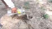 Viral Video: तमिलनाडु में प्यासे नागराज को शख्स ने पिलाया बोतल से पानी, सांप का वीडियो हुआ वायरल
