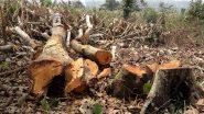 केरल सरकार ने वायनाड में पेड़ों की अवैध कटाई की जांच एसआईटी को सौंपी