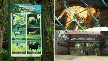 Tyavarekoppa Tiger And Lion Safari: टाइवारेकोप्पा में टाइगर और लायन सफारी में आगंतुकों का पड़ा अकाल, जानवरों को गोद लेने की अपील