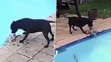 VIDEO: इस स्मार्ट स्टैफोर्डशायर डॉग ने स्विमिंग पूल में डूबते हुए अपने दोस्त की ऐसे बचाई जान, वायरल हुआ वीडियो