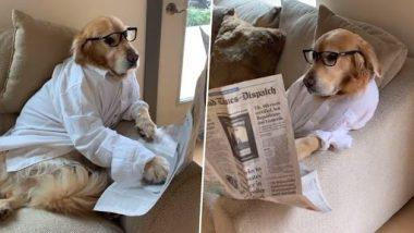 Dog Viral Video: सफेद शर्ट पहन सोफे पर बैठकर सज्जन की तरह अखबार पढ़ रहा है ये डॉग, वीडियो देख बन जाएगा दिन