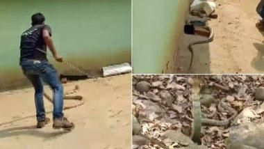 Odisha: मयूरभंज के एक घर में मिला 15 फीट लंबा किंग कोबरा, देखें दिल दहला देने वाला वीडियो