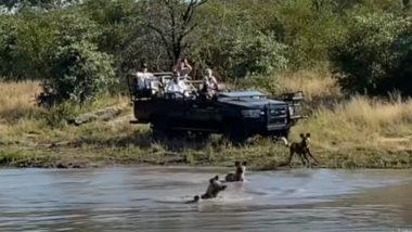 झील किनारे घात लगाए बैठे थे जंगली कुत्ते, पानी पीने आया हिरण तो कर दिया हमला, फिर जो हुआ… (Watch Viral Video)