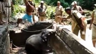 पानी की टंकी में गिरकर फंसा नन्हा हाथी, 4 घंटों की कड़ी मशक्कत के बाद रेस्क्यू टीम ने ऐसे बचाई जान (Watch Viral Video)