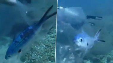 पानी के भीतर प्लास्टिक के पैकेट में फंसकर तड़प रही थी मछली, स्कूबा डाइवर ने ऐसे बचाई उसकी जान (Watch Viral Video)
