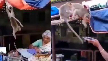 बंदरों को अंगूर खिलाती बुजुर्ग महिला का वीडियो हुआ वायरल, उसकी दरियादिली के कायल हुए लोग (Watch Viral Video)