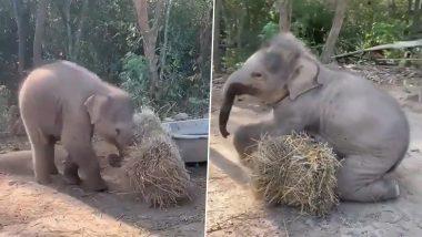 Viral Video: घास के ढेर से जंगल में अकेले खेलते दिखा नन्हा हाथी, मनमोहक वीडियो हुआ वायरल
