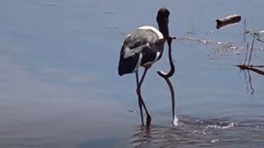 जब मछली समझकर सारस पक्षी ने झील से पकड़ा सांप, फिर जो हुआ… (Watch Viral Video)