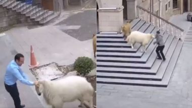Viral Video: जब टाउन हॉल के भीतर एकाएक घुस गया भेड़ों का झुंड, घबराकर इधर-उधर भागने लगे लोग