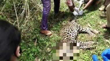 कर्नाटक के बेलावडी झील के पास एक तेंदुआ समेत 2 शावक की संदिग्ध हालत में मौत
