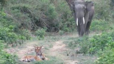 जंगल में सड़क से गुजर रहा था हाथी, बीच रास्ते में बैठा दिखा टाइगर, फिर जो हुआ… (Watch Viral Video)