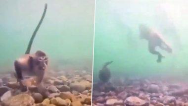 गजब! क्या आपने कभी बंदर को पानी के भीतर से खाना निकालते देखा है? Viral Video देख आपको नहीं होगा अपनी आंखों पर यकीन